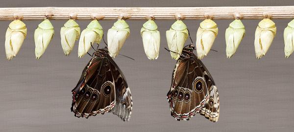 Photo of emerging butterflies